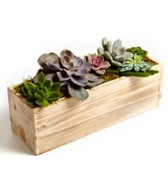 Succulent rectangle garden