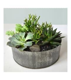 Artful Succulents