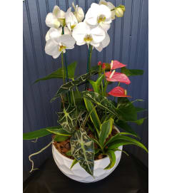 Orchid Anthurium Tropical Planter