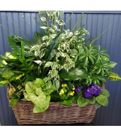 Mixed Tropical Planter with Blooming Plants