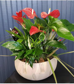 Anthurium Tropical Planter