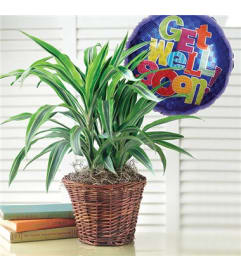 Green Plant With Balloon
