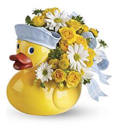 baby boy duckling