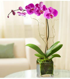 Elegant Purple Orchid