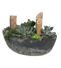 The Succulent Boat