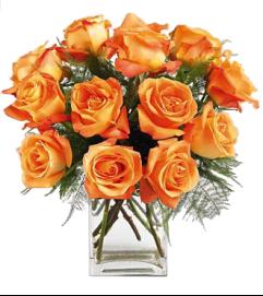 Dozen Roses Orange