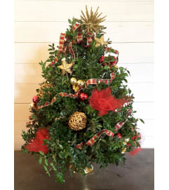 Stars and Bars Boxwood Tree