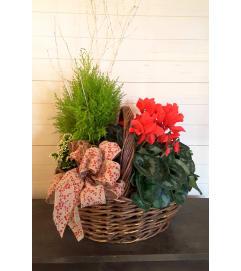 Basket of Cheery Plants