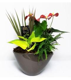 Anthurium Planter with Monarch