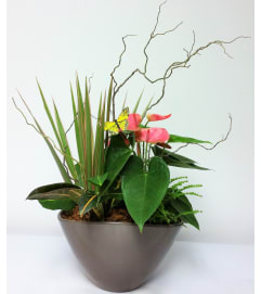 Anthurium Planter with Monarch