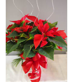 Classic Red Pointsettia 6