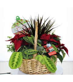 GOLDEN GLOW HOLIDAY PLANTER BASKET