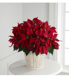 Red Poinsettia w/ Basket