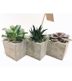 Succulent Trio Concrete