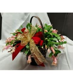Merry Cactus
