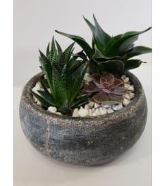 Succulent Zen Bowl