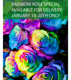 Wrapped Rainbow Rose Special