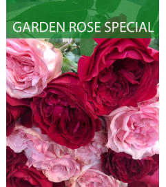 Wrapped Garden Rose Special