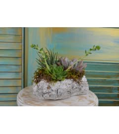 Green Birch Succulent Garden