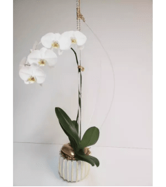 White Orchid Plant Setting