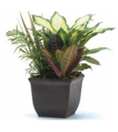 Planter - Small Dish Garden 703F