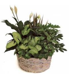 Planter - Extra Large Basket - 714