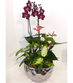 Premium Collection Orchid Garden