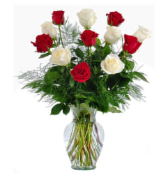 Roses- Amelia
