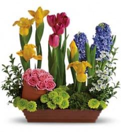 A Spring Favorites