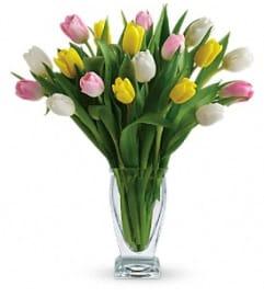 Tulips Treasure