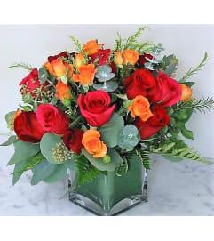 Roses-Stephanie