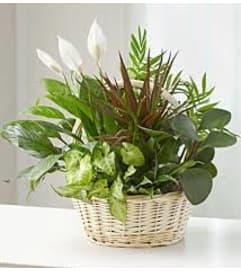 Unique Memory Dish Garden