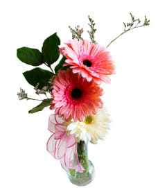Gerberas in a vase