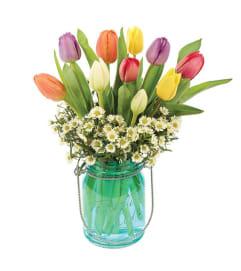 Mason Tulip