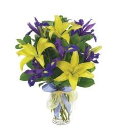 Lily & Iris Surprise