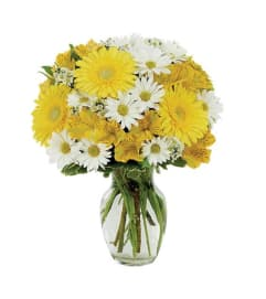 Daisy A Day Bouquet