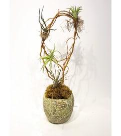 Artful Air plants