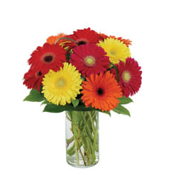 Gerberas Galore Bouquet