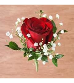 Red Rose Boutonniere w/ filler