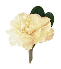 The White Carnation Boutonniere