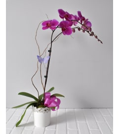 Potted Orchid Plant