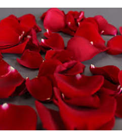 Red Rose Petals. Today pick!