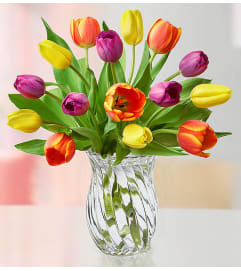 Mother's Radiant Tulips