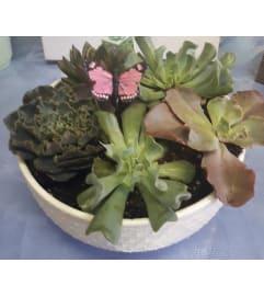 6 inch Succulent Planter