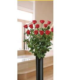 Four feet roses