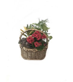 Small Dish Garden Basket