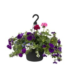 Mixed Hanging Basket-12