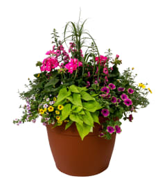 Mixed Patio Pot