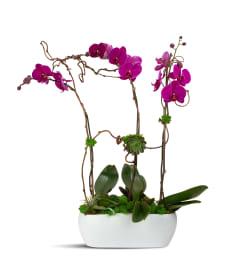 Purple Blooming Trio