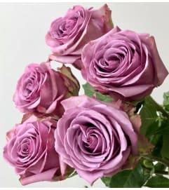 100 Premium Long Lavender Roses